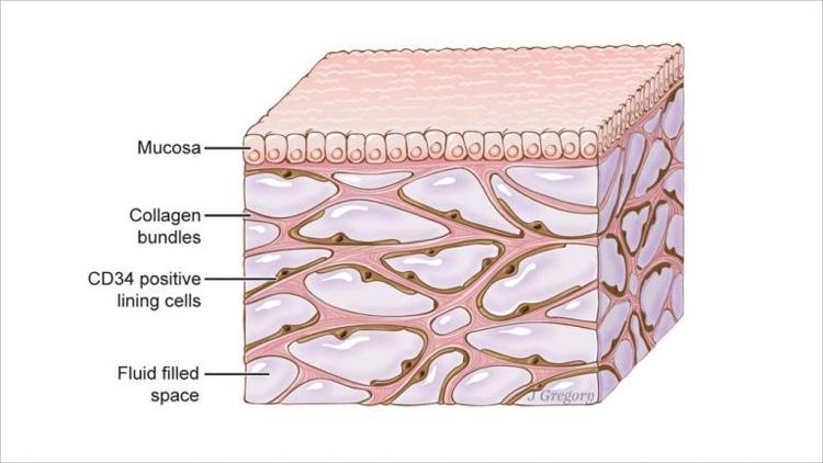 اندام جدید اینترستیتیوم